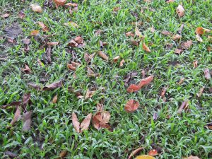 Lawn Moss Removal Guide