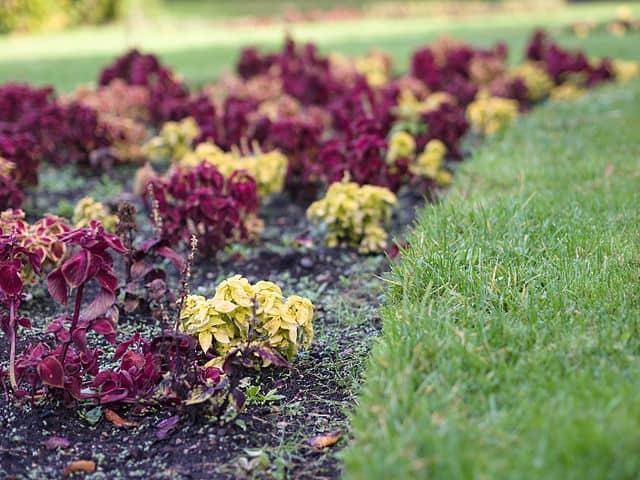 Best Lawn Edging Treatment