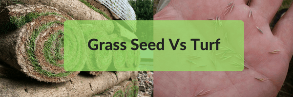 Grass Seed Vs Turf