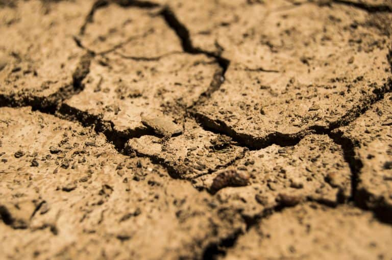 Lawn Care During Drought