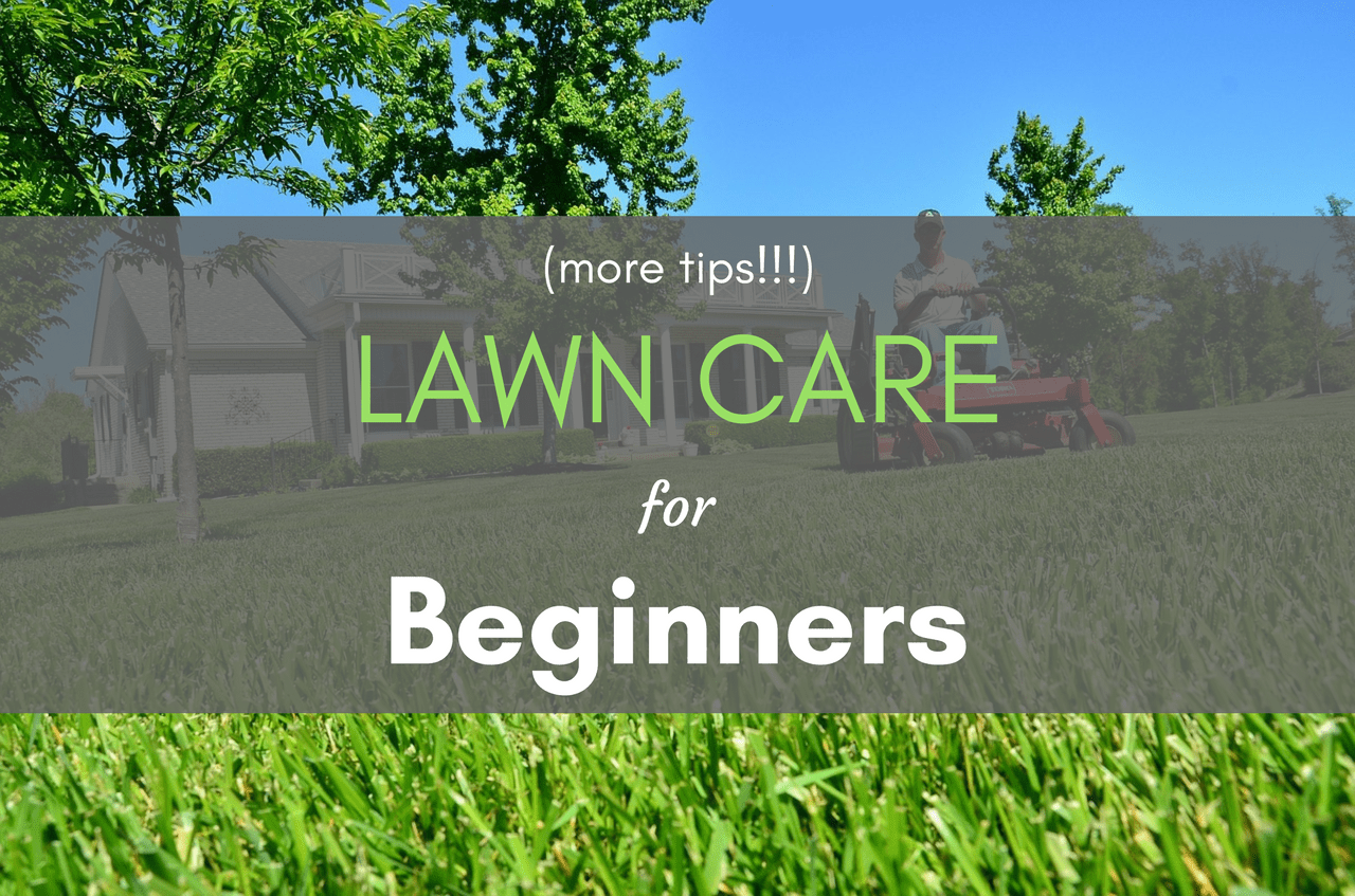 Lawn Care For Beginners More Tips Easylawnmowing