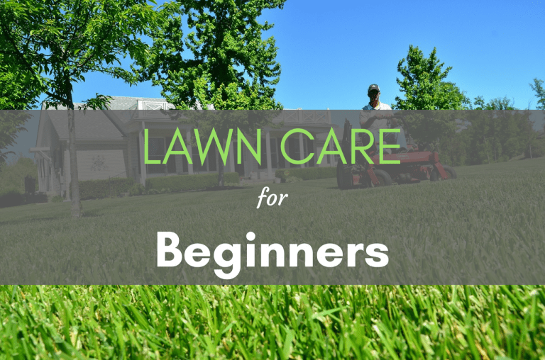 Lawn Care For Beginners