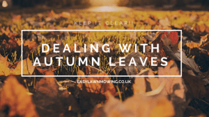 autumn leaves in lawn