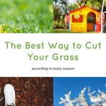 The Best Way to Cut Your Grass